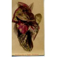 CDV.  Hand Colored Leaves. Christmas Greetings