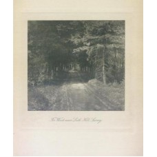Evans, Frederick. Fir Woods Near Leith Hill, Surrey. gravure