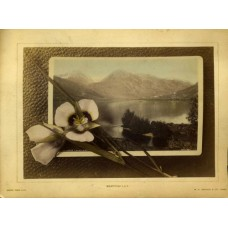 Jackson, William Henry. Hand Colored Photo Montage. Mariposa Lily. Upper Twin Lake Colorado