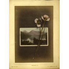 Jackson, William Henry. Hand Colored Photo Montage. (2)Mariposa Lily. Upper Twin Lake Colorado