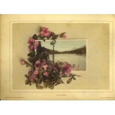 Jackson, William Henry. Hand Colored Photo Montage. Wild Rose. Green Lake Near Georgetown Colorado